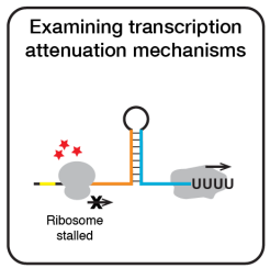 attenuator_project-01