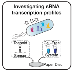 sRNA_project-01